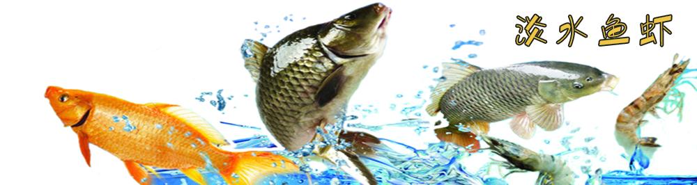厨兄弟生鲜蔬果一站式食材配送平台|淡水鱼虾